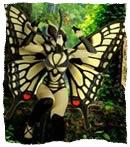 batterfly.jpg